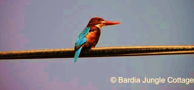 ''Bird Life Adventure''